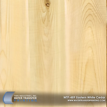 WTP-489 Eastern White Cedar